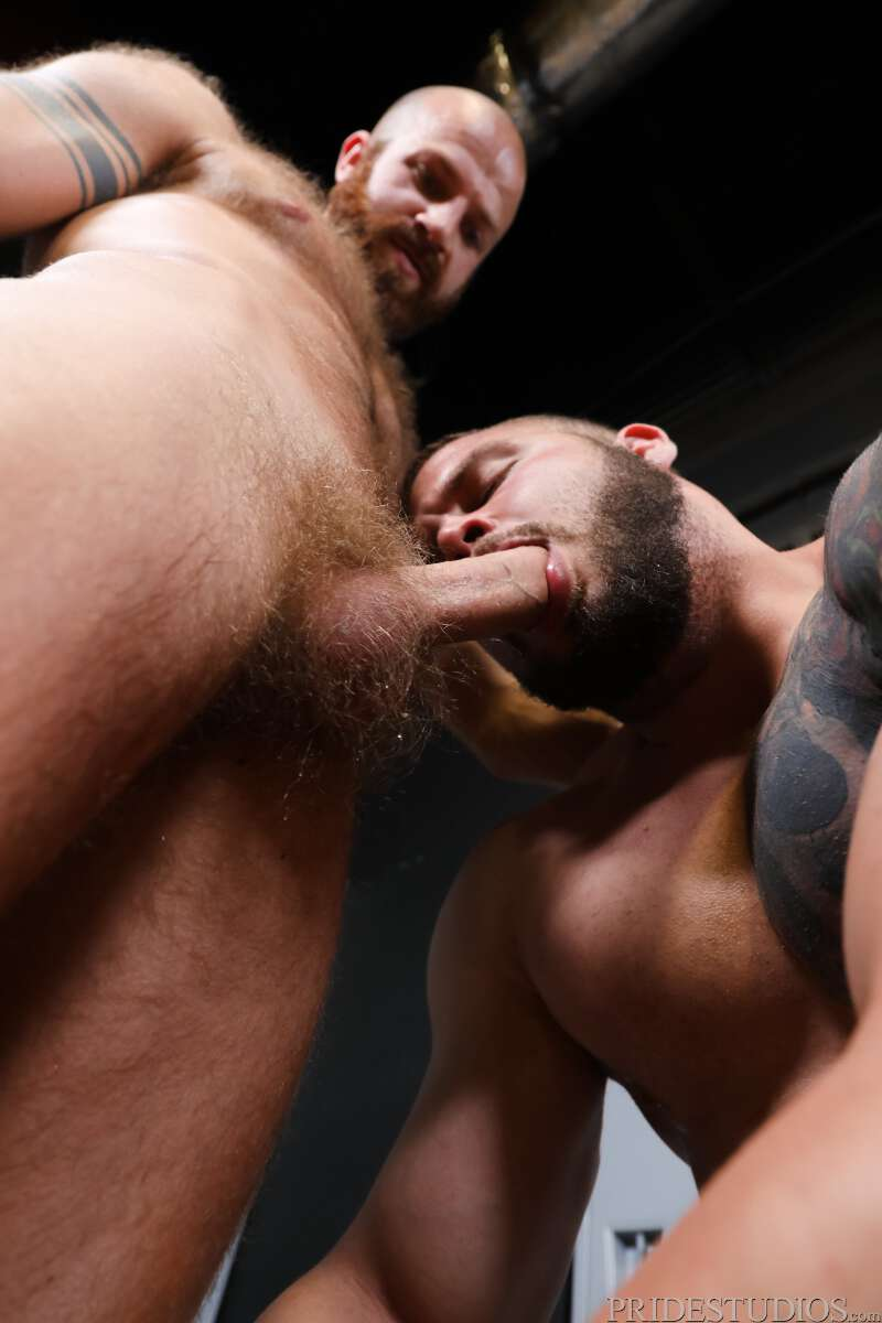 bearded muscle man sucking a hard cock